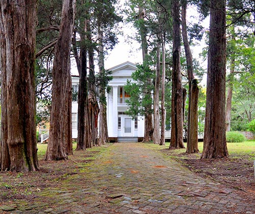 Rowan oak small